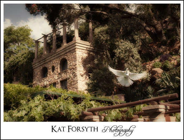 Dove Shepstone Gardens wedding