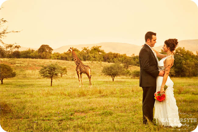 Giraffe at wedding