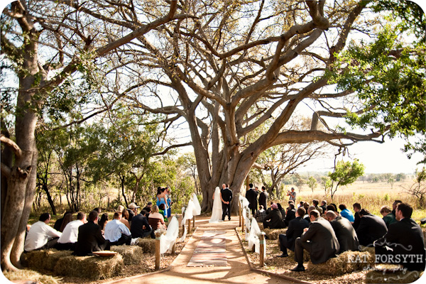 Wedding under ancient fig tree