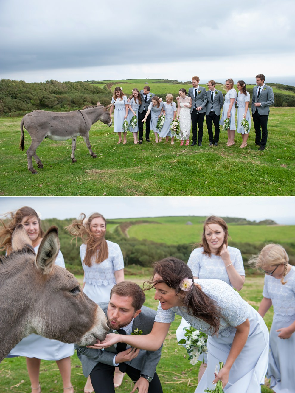 wedding donkey East Soar Farm