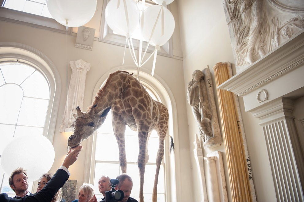 Floating giraffe at Aynhoe Park wedding